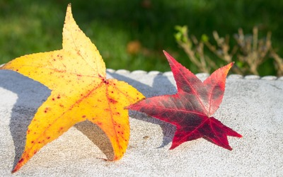 Yellow and red leaves on a bench wallpaper