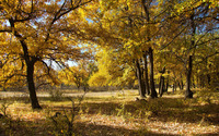 Yellow autumn forest wallpaper 2880x1800 jpg