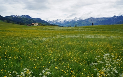 Yellow flowers on the green mountain field wallpaper
