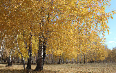 Yellow forest wallpaper