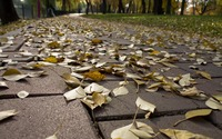 Yellow leaves on the park alley wallpaper 2880x1800 jpg