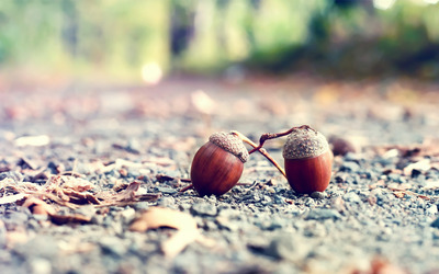 Acorns [2] Wallpaper