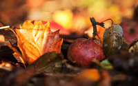 Apple among fallen leaves wallpaper 2560x1600 jpg