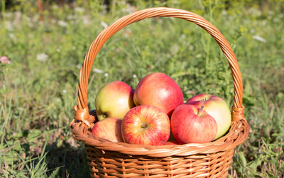 Apple basket in the grass wallpaper