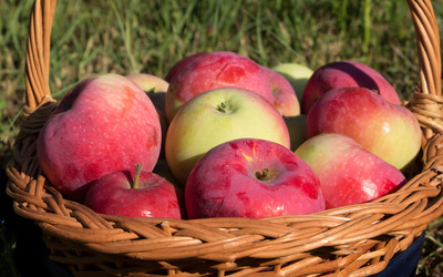 Apples in a wicker basket wallpaper