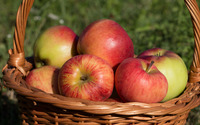 Apples in the soft sunlight wallpaper 3840x2160 jpg