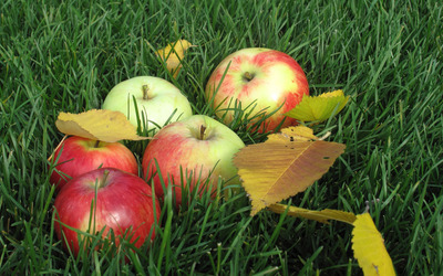 Apples on the grass wallpaper