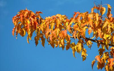 Autumn branch [2] wallpaper