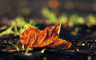 Autumn leaf on the ground wallpaper