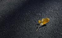 Autumn leaf on the pavement wallpaper 2560x1600 jpg
