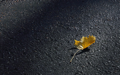 Autumn leaf on the pavement wallpaper