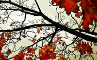 Autumn Leaves [12] wallpaper 1920x1200 jpg