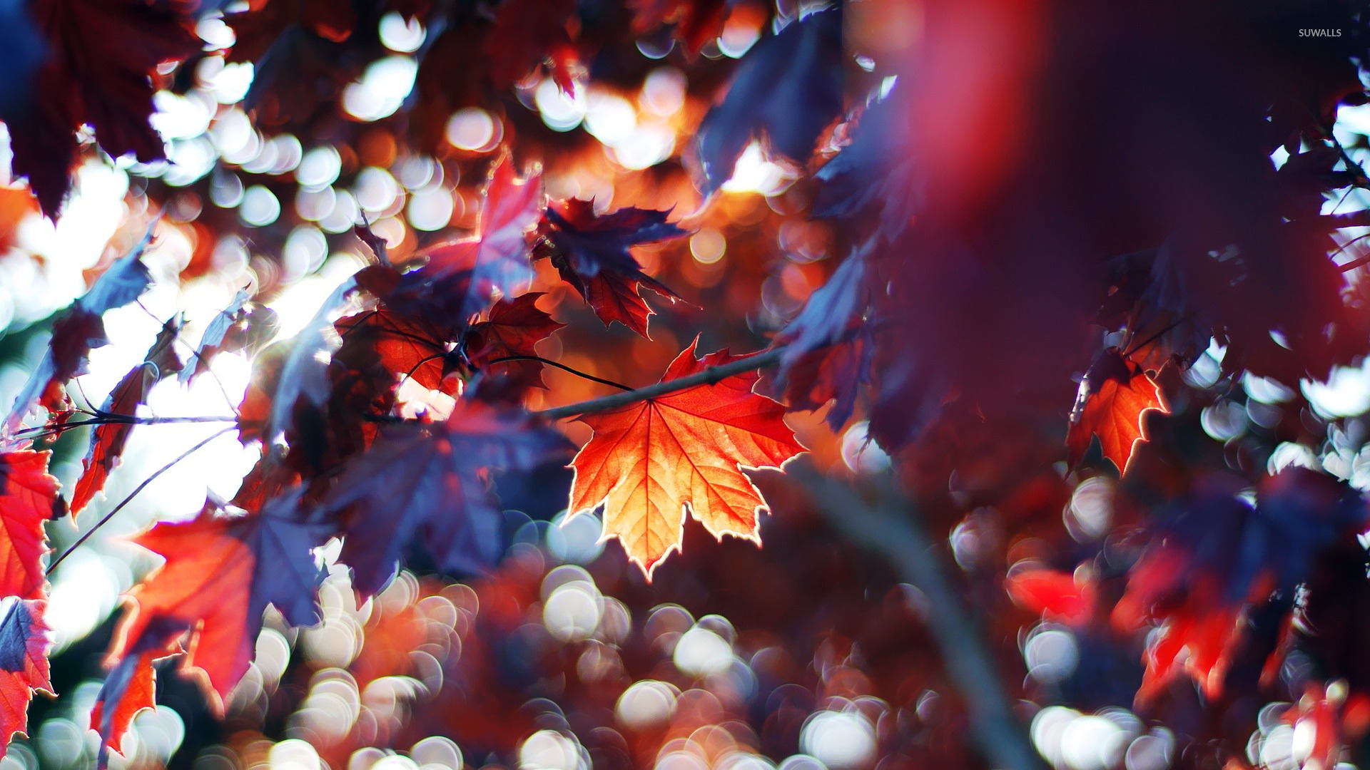 Autumn Leaves 9 Wallpaper Photography Wallpapers 15141