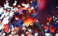 Autumn leaves [9] wallpaper 1920x1080 jpg