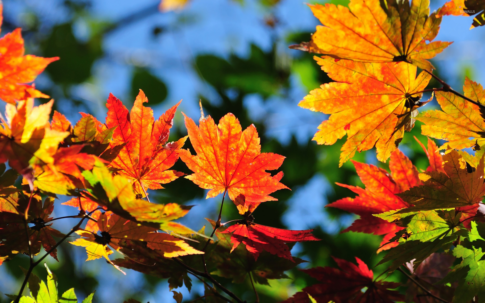 Fall Leaves Photography Wallpaper Autumn leaves [10] wal...
