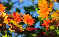 Autumn leaves [10] wallpaper 1920x1200 jpg