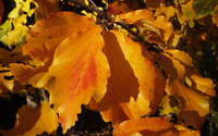 Autumn leaves [24] wallpaper 2560x1600 jpg