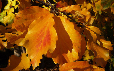 Autumn leaves [24] wallpaper