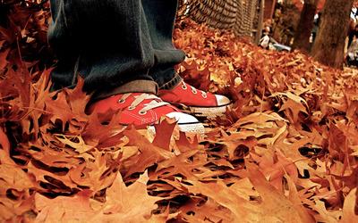 Autumn leaves [25] wallpaper