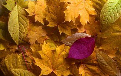 Autumn leaves [18] wallpaper