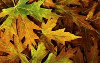 Autumn leaves [5] wallpaper 2560x1600 jpg
