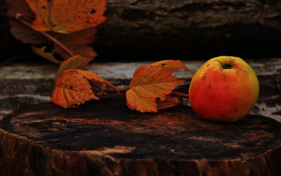 Autumn leaves and an apple on a tree trunk wallpaper