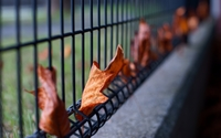 Autumn leaves stuck in the fence wallpaper 2560x1600 jpg