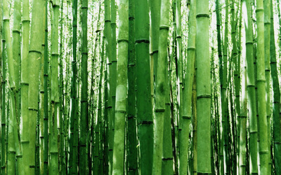 Bamboo [2] wallpaper