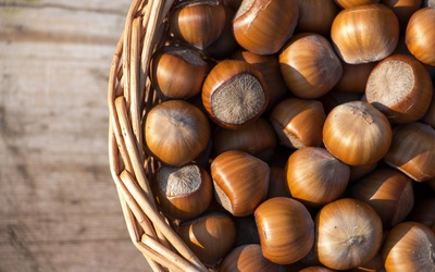 Basket full of hazelnuts wallpaper