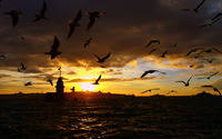 Birds in the sunset [2] wallpaper 1920x1200 jpg