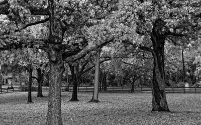 Black and white park wallpaper