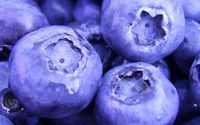 Blueberries wallpaper 1920x1080 jpg