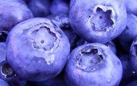 Blueberries wallpaper 1920x1080 jpg