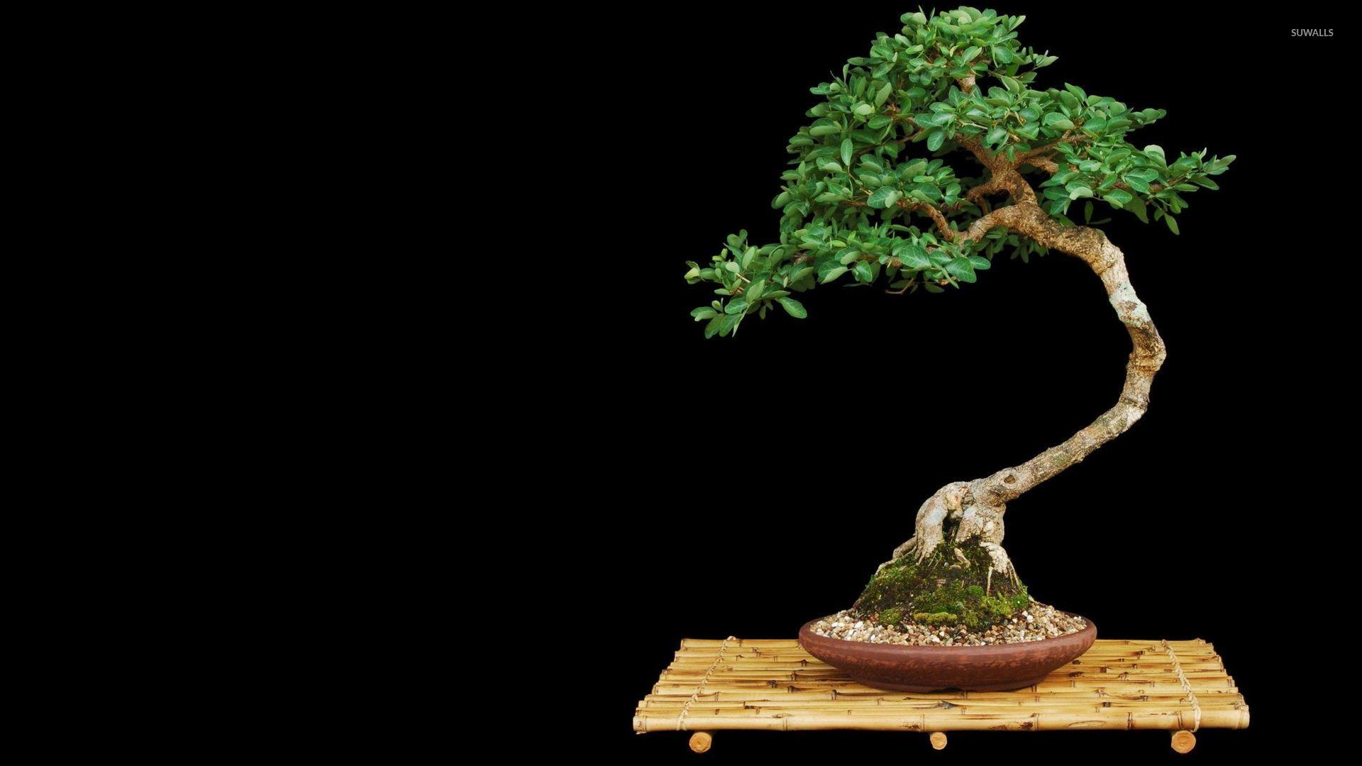 bonsai wallpaper photography wallpapers 11946