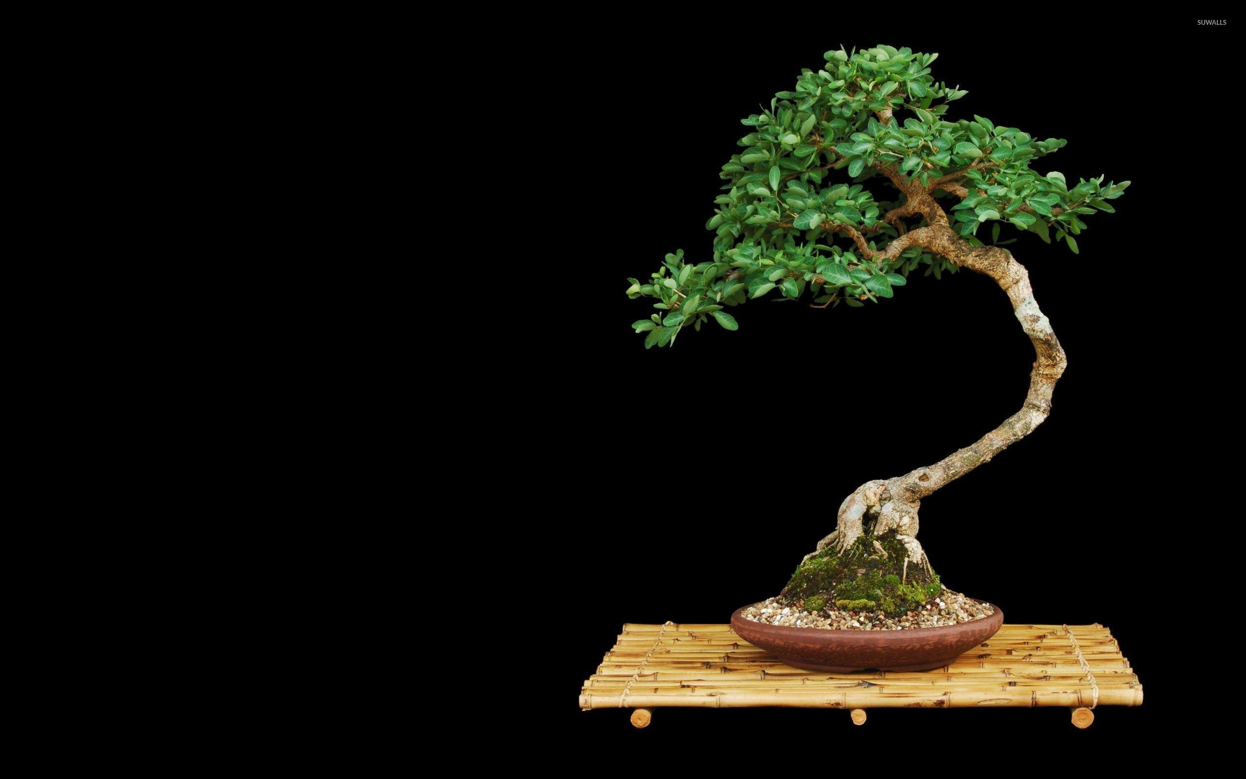bonsai wallpaper 03 ndash -#main