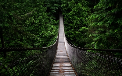 Bridge lost in the green forest wallpaper
