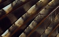 Brown feathers close-up wallpaper 1920x1200 jpg