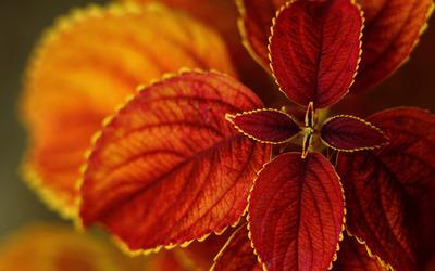 Brown leaves wallpaper