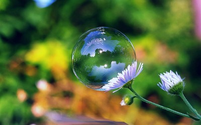Bubble on a daisy wallpaper