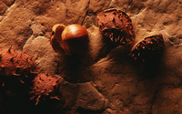 Chestnut wallpaper 1920x1200 jpg