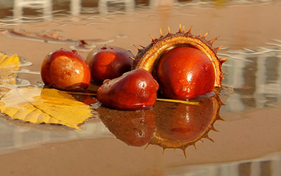 Chestnut reflecting in the water wallpaper