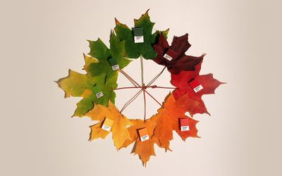 Color coded leaves wallpaper