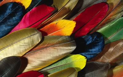 Colorful feathers wallpaper