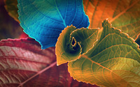 Colorful leaves wallpaper 1920x1200 jpg