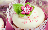 Cupcake wallpaper 2560x1600 jpg