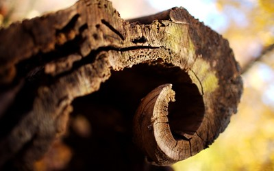 Curved tree bark wallpaper