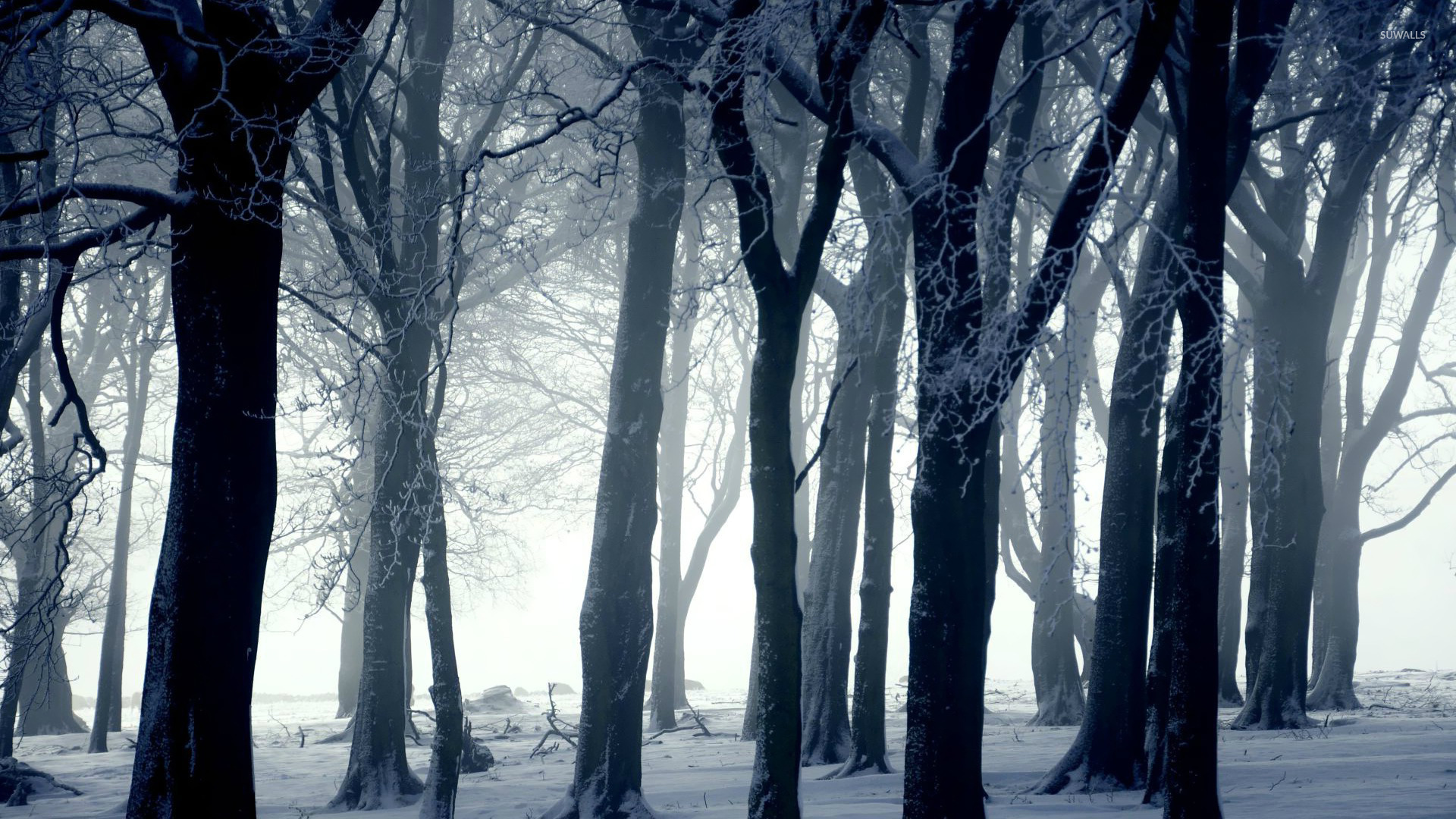 dark forest in winter wallpaper photography wallpapers