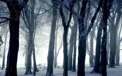 Dark forest in winter wallpaper