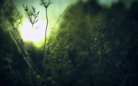 Dew covered plants wallpaper 1920x1080 jpg