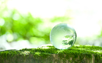 Dew drop on moss wallpaper 2560x1440 jpg